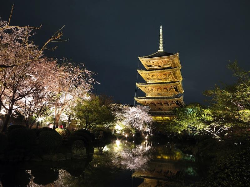 東寺 春のライトアップ