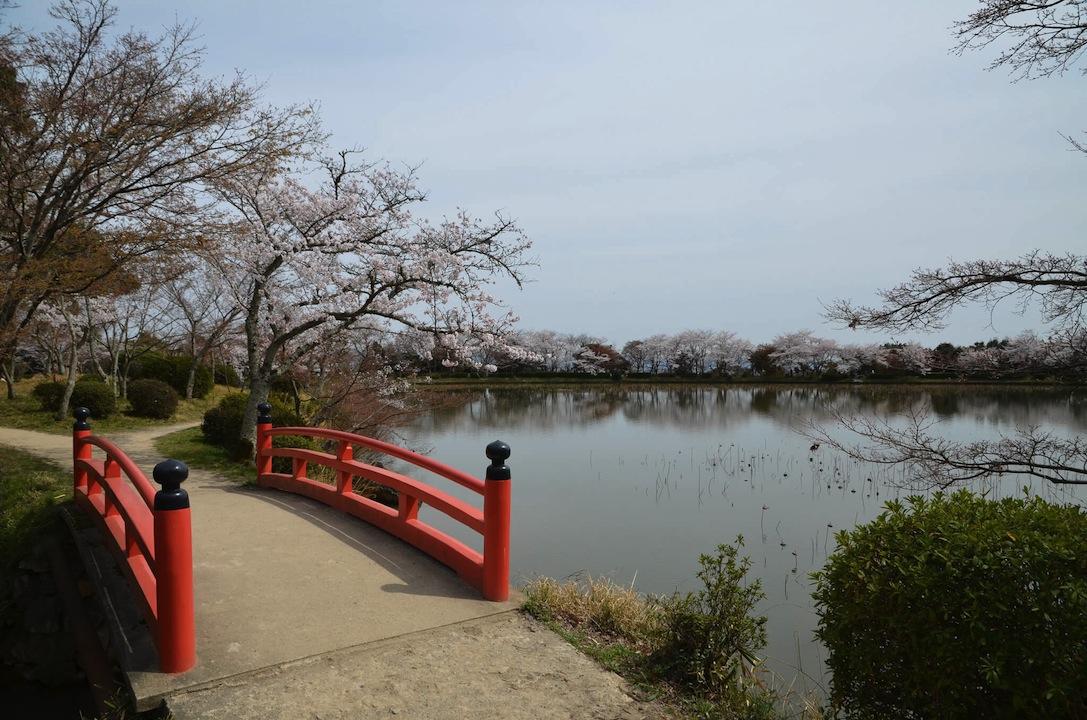 春の大沢池