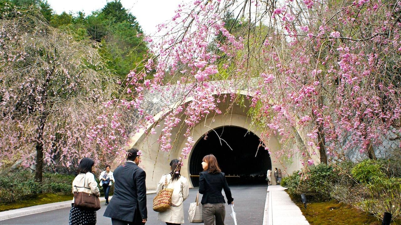 miho museumのしだれ桜