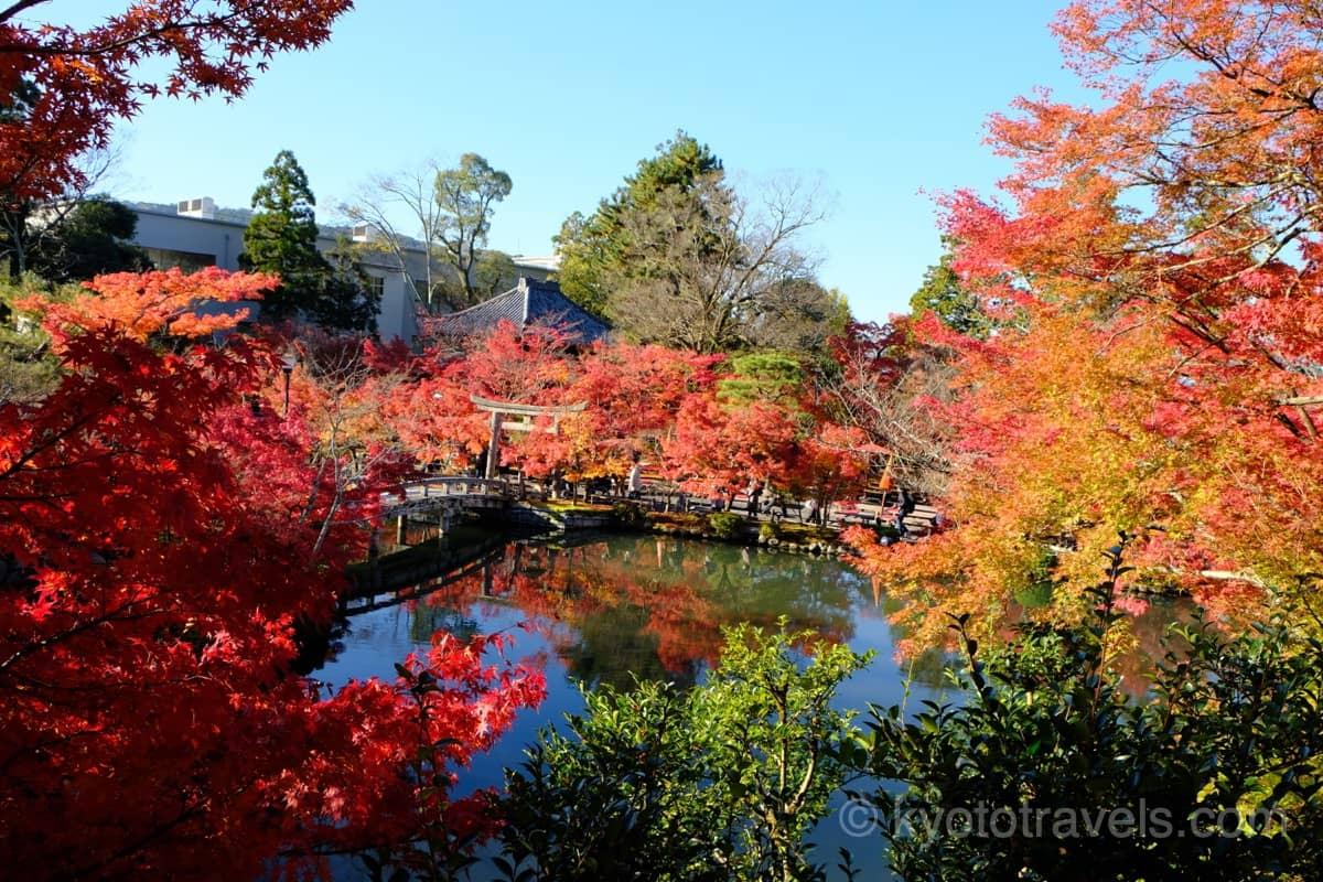 紅葉に囲まれた永観堂の庭園